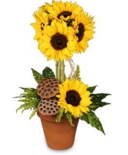 Pot O\' Sunflowers